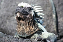 Classic Travel - Gallery - Galapagos